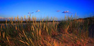 plaża i wydmy
